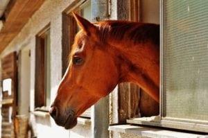 Doppelleben: Airbus-Logistiker und Heilpraktiker für Pferde
