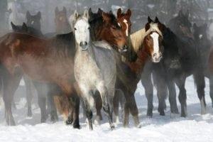 Winterspaß im Schnee (Foto: Edition Boiselle)