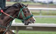 Symbolfoto Pferderennen