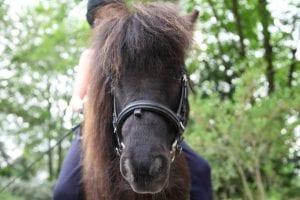 Rahmen der Verbandstagungen der Deutschen Reiterlichen Vereinigung ging es auch um Kinderreitunterricht. (Foto: Hafensänger)