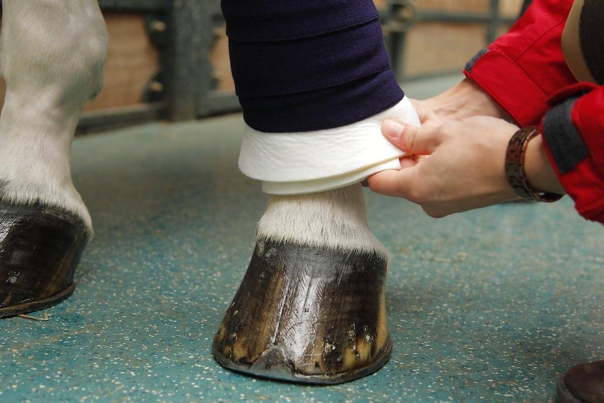 Gamaschen, Bandagen und Co. – verletzliche Pferdebeine schützen ...
