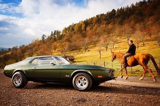 pferd und auto m ssen im stra enverkehr abstand halten horseweb. Black Bedroom Furniture Sets. Home Design Ideas