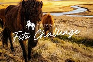 horseweb challenge