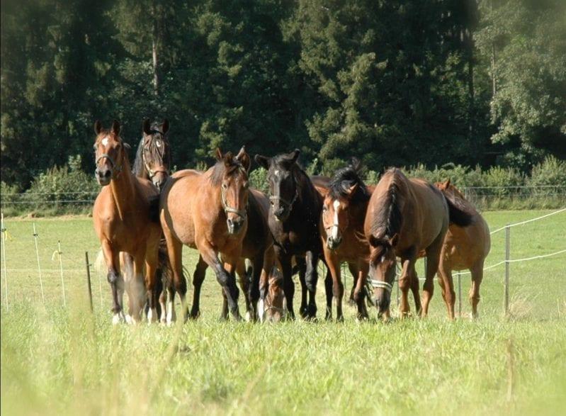 Auch alte Pferde müssen artgerecht gehalten und gepflegt werden – am besten in der Herde