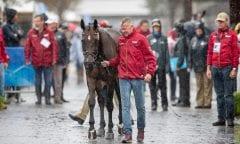 DIBOWSKI Andreas (GER), FRH Corrida Tryon - FEI World Equestrian Games™ 2018 Vielseitigkeit Verfassungsprüfung 16. September 2018 © www.sportfotos-lafrentz.de/Stefan Lafrentz