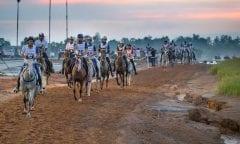 Symbolbild Distanzreiten (Lafauvre Julien, FRA, Sherazade Cabirat Tryon - FEI World Equestrian Games™ 2018 Distanzreiten/Endurance  12. September 2018) © www.sportfotos-lafrentz.de/Sharon Vandeput