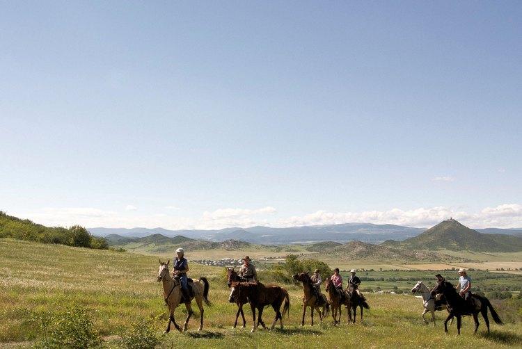 Bild: Pferd und Reiter