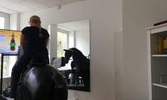 Reitsimulator Hannover (Foto: horseweb)