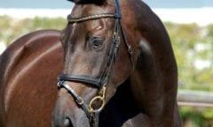 Verkaufstag Ilsfeld: Am 1. Advent Pferde shoppen