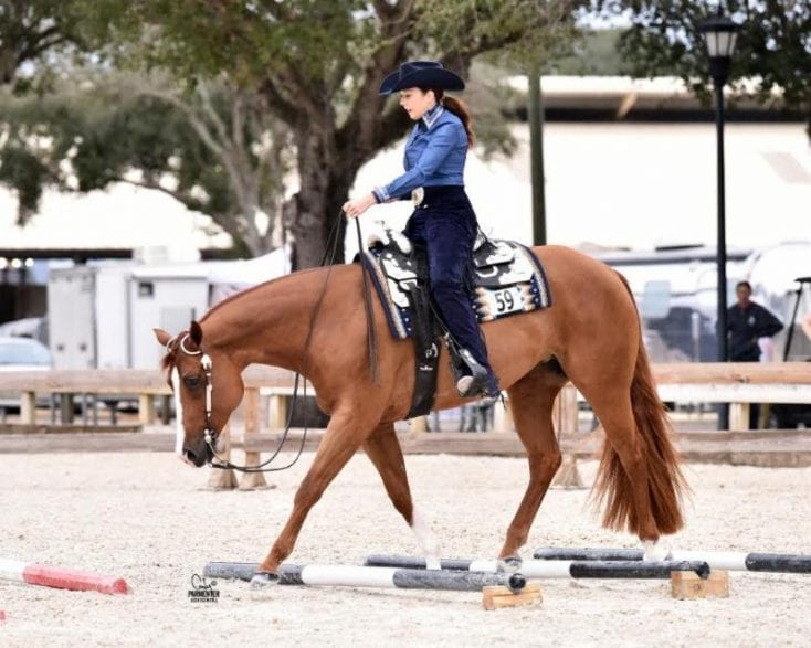 Angela Wade and A Soxy Dream, Amateur Trail circuit champions at the 2017 Florida Gold Coast Quarter Horse Circuit. Photo: Cody Parmenter