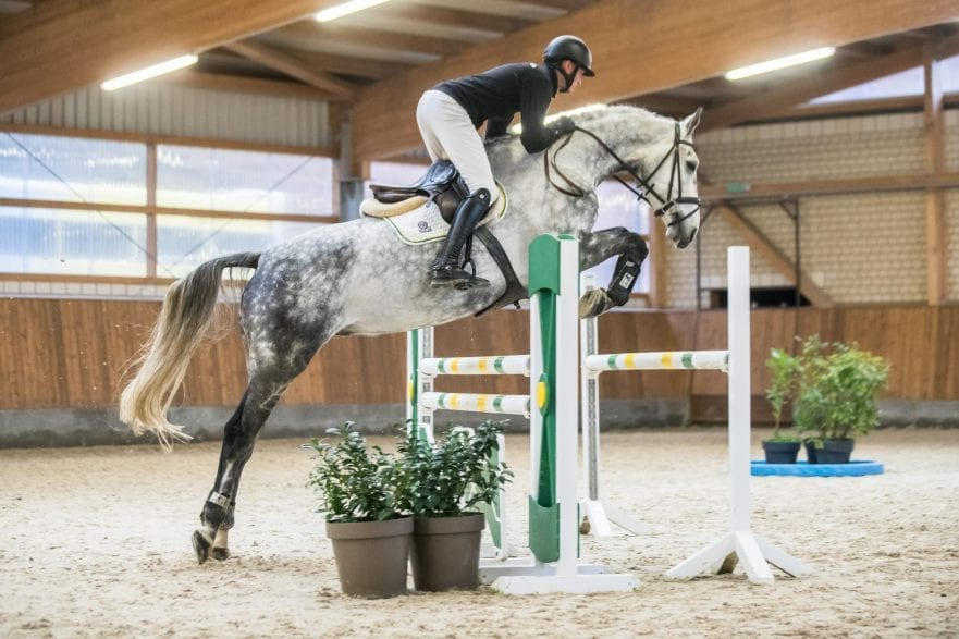 Giotto. Photo (c) Event Horse Auction