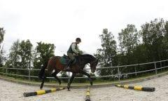 Stangenarbeit Redefin - Anreiten von jungen Pferden 2010 www.sportfotos-lafrentz.de/Stefan Lafrentz