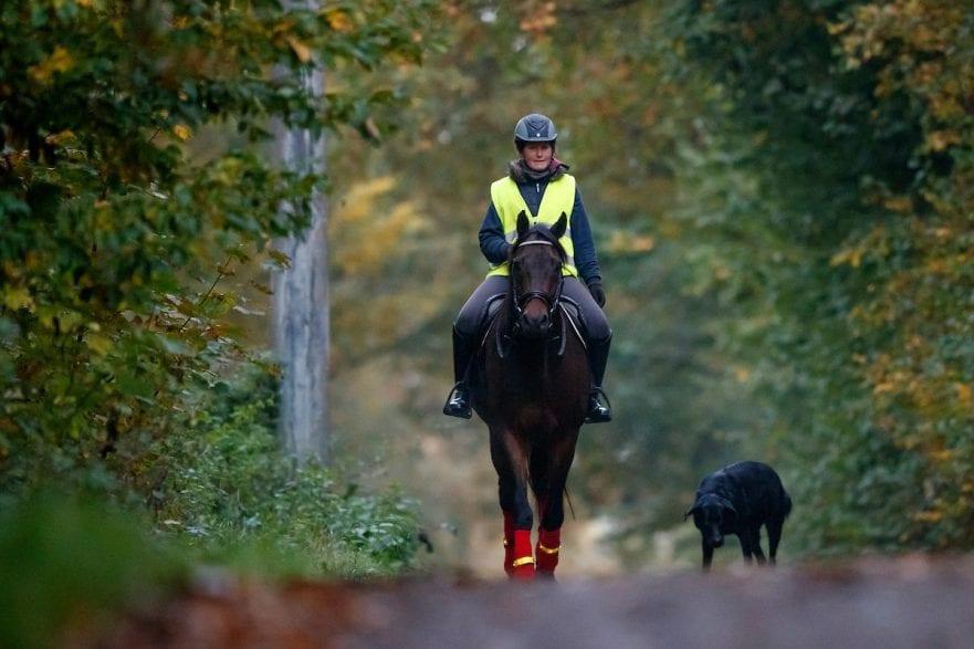 Ausreiten Herbstausritt 2017 © www.sportfotos-lafrentz.de/Stefan Lafrentz