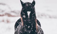 Symbolbild Pferd im Schnee, Winter (unsplash)