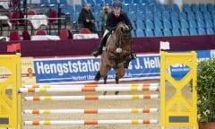 HACKERT Colin (GER), Caskarico Neustadt-Dosse - CSI 2019 Springpferdeprüfung Kl. L 5 jährig 09. Januar 2019 © www.sportfotos-lafrentz.de/Stefan Lafrentz