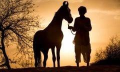 Foto: Pferd&Reiter