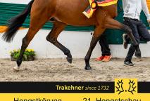 Foto: Trakehner Verband