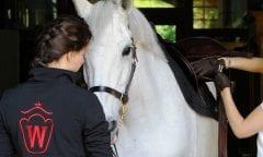 Foto: Westfälisches Pferdestammbuch