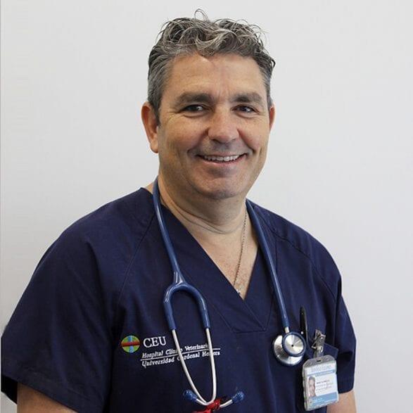 Dr. Antonio Cruz ist Leiter der tierärztlichen Klinik in Valencia und Pferdeesxperte. (Foto: CEU)