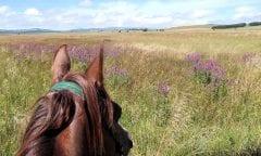 Auf Reiterreise durch Bosnien und Herzegowina. Foto: Pferd&Reiter