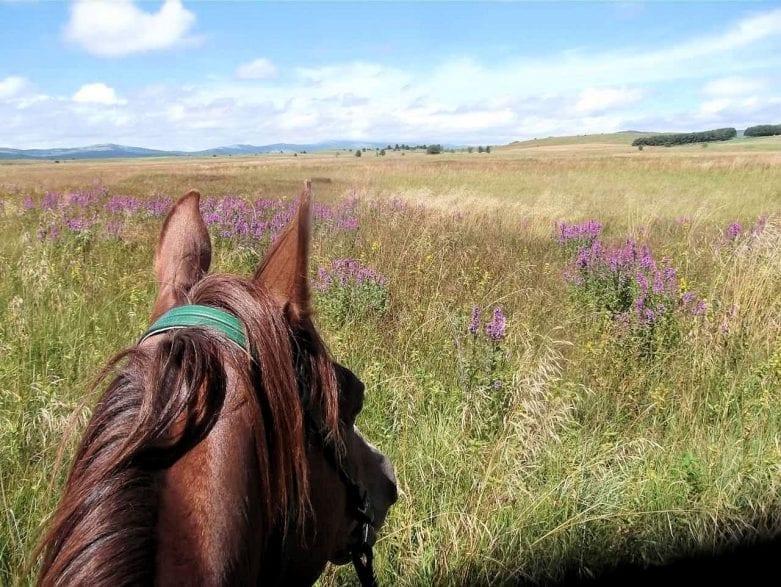 Auf Reiterreise durch Bosnien und Herzegowina. Foto: Pferd und Reiter