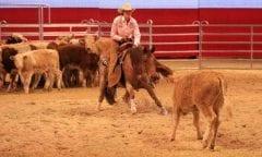 Ute Holm, Cutting Cattle. (c) EQUITANA 2019