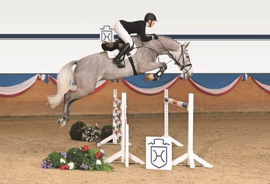Die Holsteiner Auktionspferde – hier der Cachas-Quinar-Sohn Cid – präsentieren sich am 30. März erstmalig in der Elmshorner Fritz-Thiedemann-Halle. Foto: Janne Bugtrup