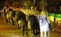 Die Abendshow bei der Nordpferd hat jedes Jahr einiges zu bieten. Foto: Mireya von Rantzau
