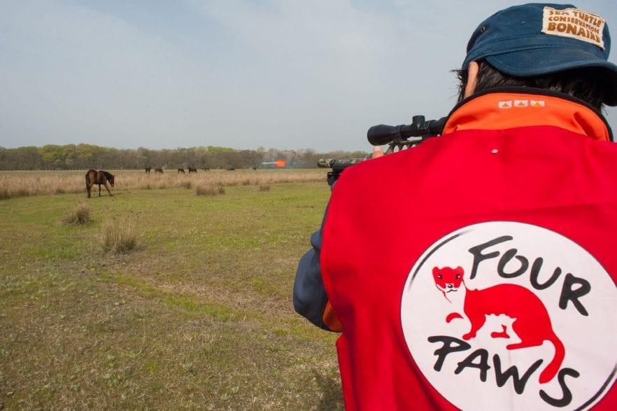 Here: Ovidiu Rosu is darting a horse. (©-FOUR-PAWS-Alex-Tanasescu)