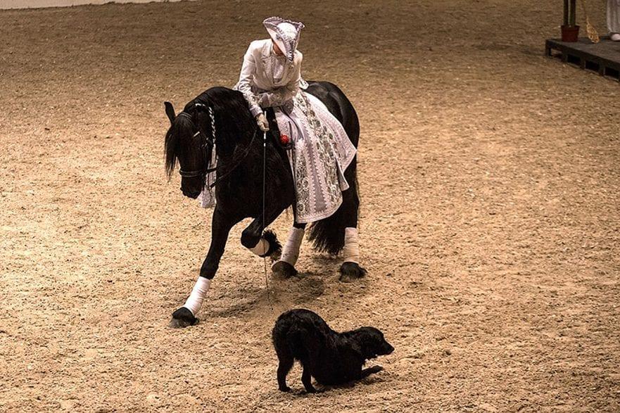 Buntes Programm gibt es jedes Jahr auf der Nordpferd. Foto: Mireta von Rantzau