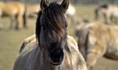 Wildpferd (Foto: Pixabay)