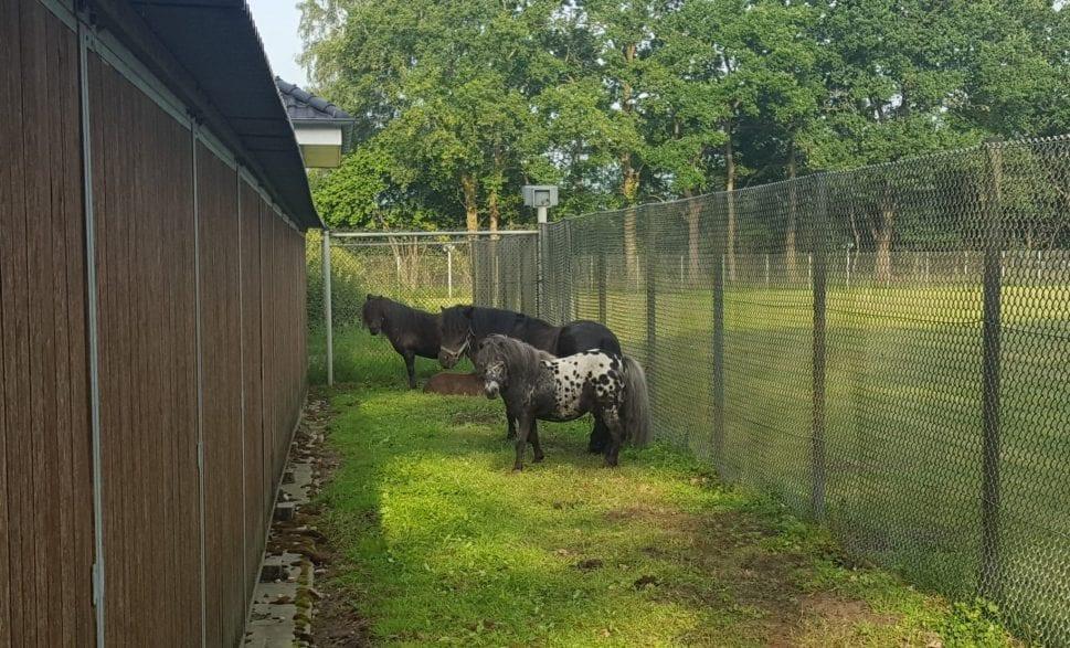 Ponys auf der Grünfläche in Neusüdende (Polizeibild)
