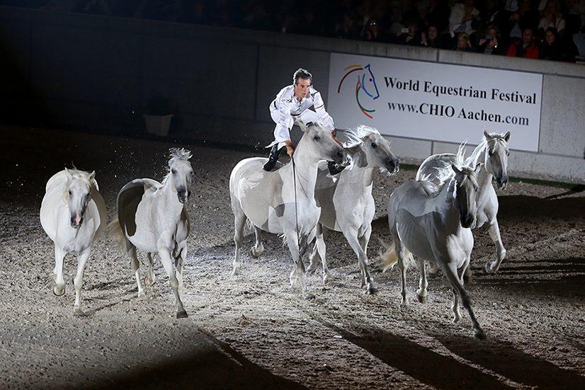 Weltstars: Jean-François Pignon und seine fantastischen Schimmel. Foto: Andreas Steindl