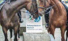 Die Landesreiterstaffel NRW - Eine der sympathischsten Polizeidienststellen kommt nach Wattenscheid!