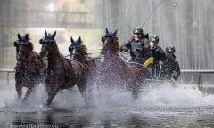 Die Europameisterschaften der Vierspänner Pferde finden in Donaueschingen statt. Foto: Ralf Brunner
