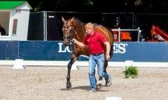 Ehning Marcus, GER, Comme Il Faut 5 Rotterdam - Europameisterschaft Dressur, Springen und Para-Dressur 2019 Vet-Check Springen Horse Inspection Jumping horses 19. August 2019 © www.sportfotos-lafrentz.de/Sharon Vandeput