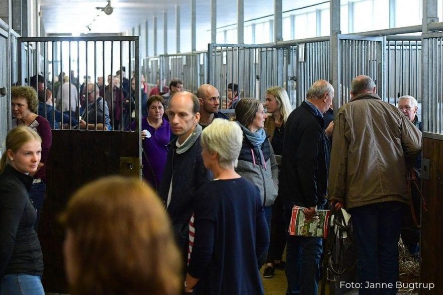 Fohlenverkaufstag in Elmshorn