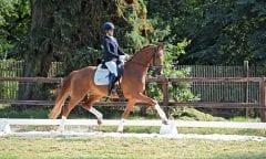 Klosterhof-Pferde machen Freude - hier Bond Girl von Borsalino-De Niro, die zum Lot der 30. Herbstauktion auf dem Klosterhof Medingen zählt. (Foto: U. Beelitz)