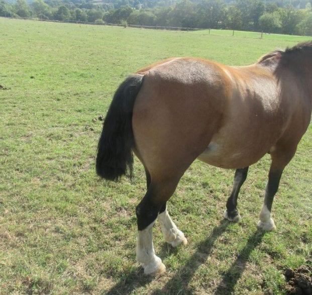 Einem Pferd wurde der Schweif halb abgeschnitten. Foto: Polizei MK