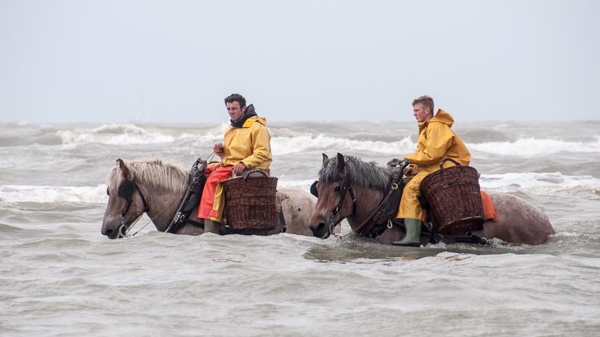 Die Krabbenfischer in der Nordsee können sich auf ihre Pferde verlassen. (Bildquelle: https://www.andersreisen.net/andersreisen/wp-content/uploads/2015/06/15-06-02-krabbenfischer-nordsee3.jpg)