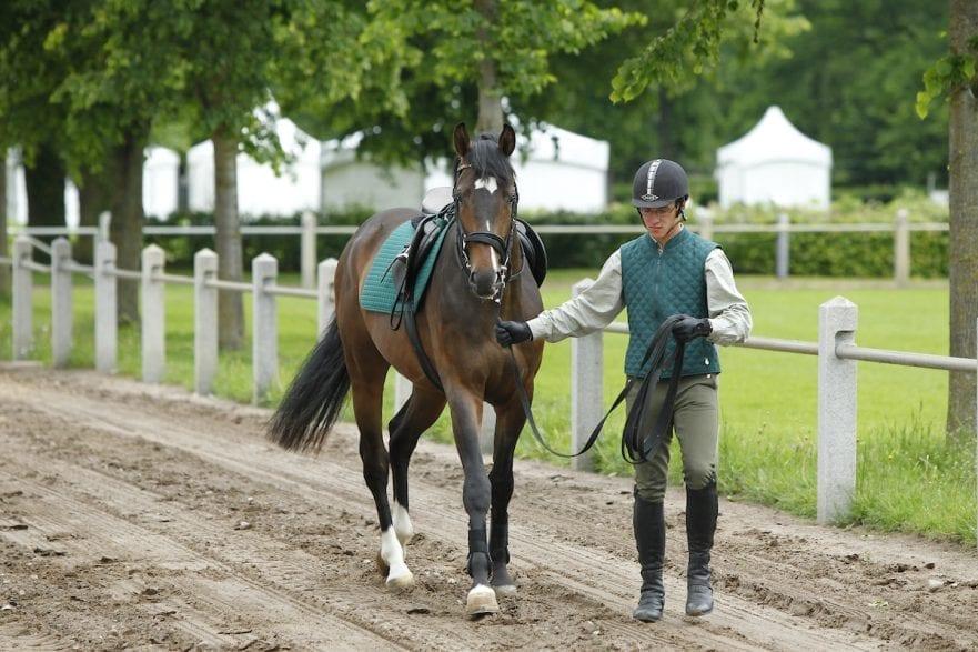 Führen Redefin - erstes Anreiten von jungen Pferden 2010 Führen an der Longe www.sportfotos-lafrentz.de/Stefan Lafrentz