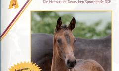 DSP Online-Katalog durchstöbern