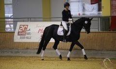 Verkaufspferd Black Magic unter Marlies Länger - Foto: TEAM myrtill