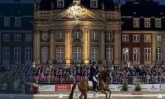 Die letzte Chance nutzen: Die letzten Auktionspferde des Jahres werden am 9. November versteigert