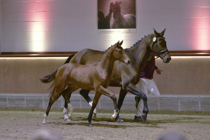 Mit großen Tritten begeisterte die typvolle Ars Aurelia ihren Käufer. Foto: Reumann