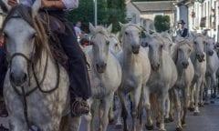 Camargue-Pferd (Foto: pixabay)