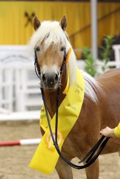 "Hengstkörung 2019 ""Foto: Ponyverband Hannover/ Pantel"""