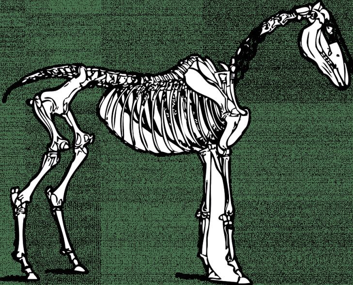 Symbolbild (Foto: Pixabay)