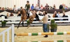 Wie auch bei der erfolgreichen Auktion im vergangenen Jahr gibt es am Sonntag vor der Versteigerung im Rahmen eines Brunches noch einmal eine öffentliche Präsentation der Pferde mit der anschließenden Möglichkeit des Ausprobierens.  (Foto: T. Hartwig)