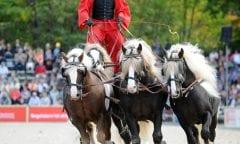 Hält die Zügel fest in der Hand: Pferdewirtschaftsmeister Thomas Schick ist seit August 2019 Funktionsstellenleiter für Fohlenaufzucht auf den Vorwerken Fohlenhof und Güterstein (Foto: Kube)
